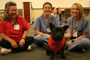 HABIC dog with nurses