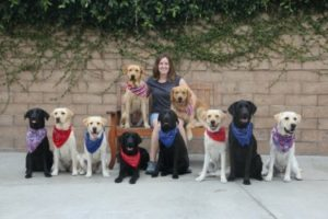 jackson with group of dogs in training at canine companions for independence