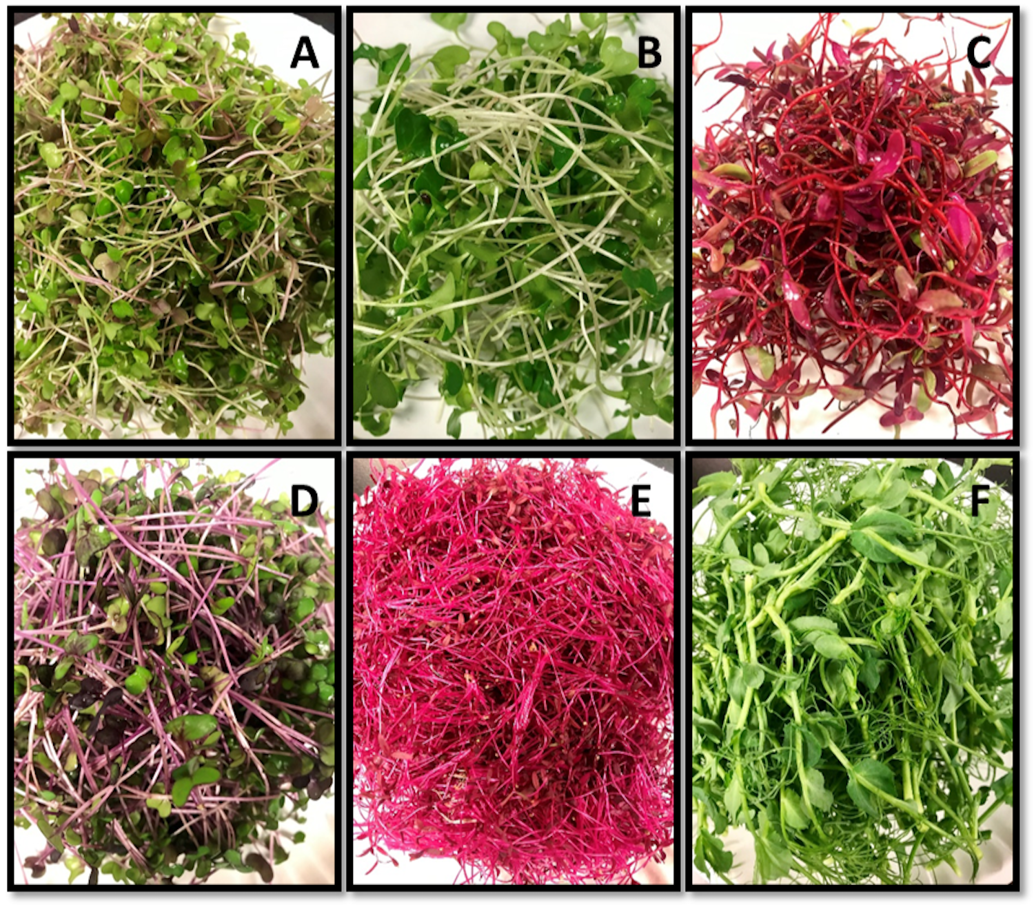 Photos of the 6 microgreens