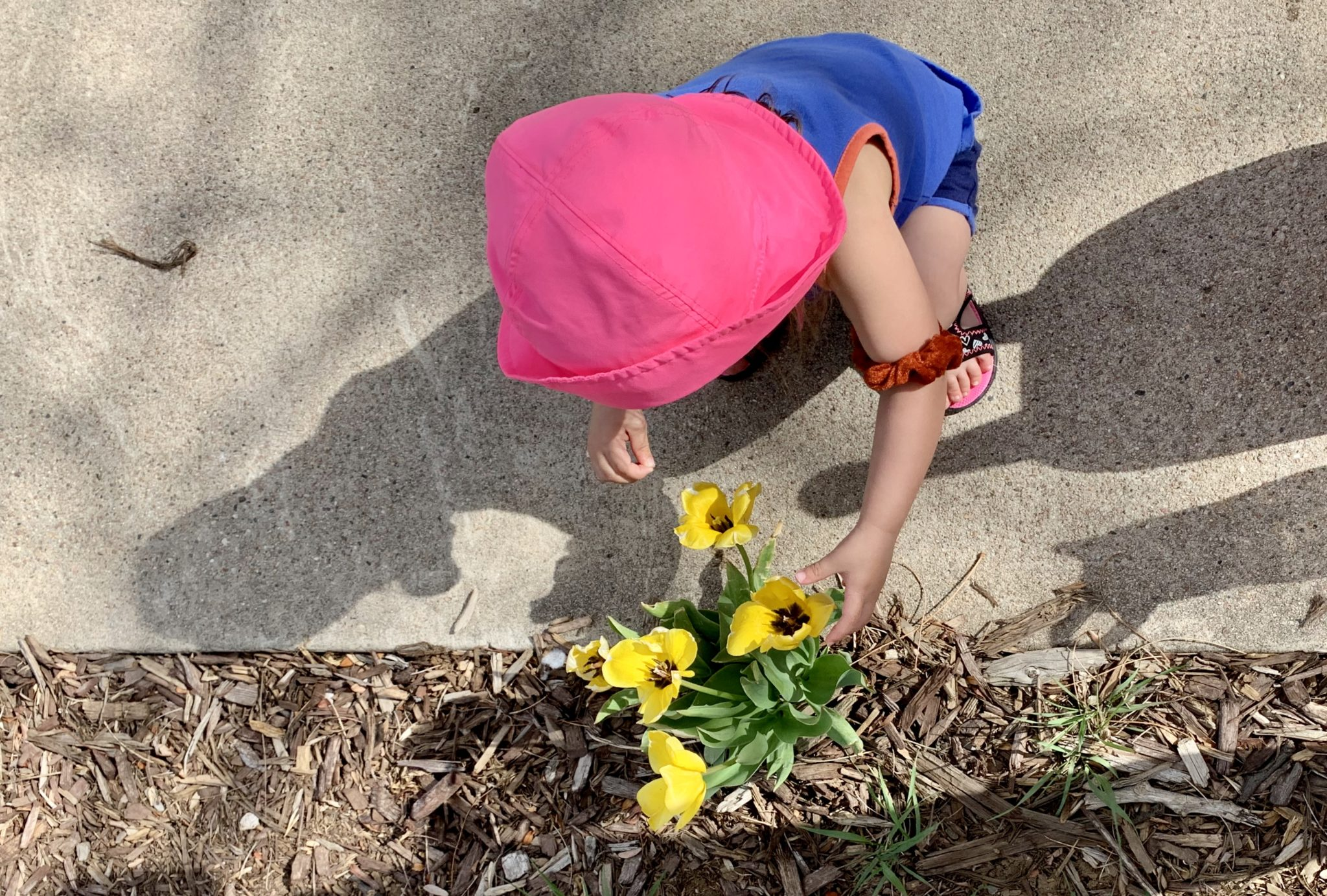 Young child touches a yellow flower