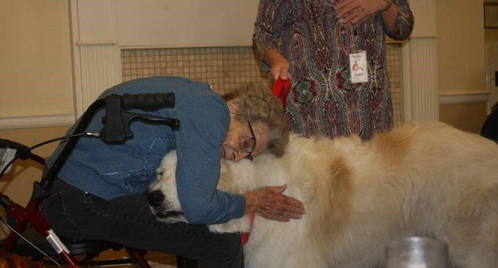 human-animal bond in colorado therapy dog